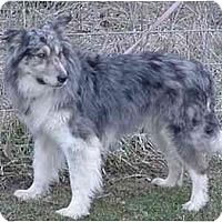 Adopt A Pet :: Smokey-ADOPTED! - Tiffin, OH
