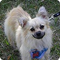 Adopt A Pet :: BRIE - Hesperus, CO