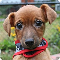 Adopt A Pet :: Lily (IN NEW ENGLAND) - Brattleboro, VT