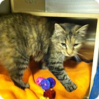 Adopt A Pet :: Fiona - Muncie, IN