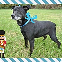 Adopt A Pet :: Nubby - Bedminster, NJ