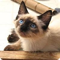 Adopt A Pet :: Sweet Boy - Davis, CA