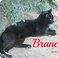 Adopt A Pet :: Branci - Colbert, GA