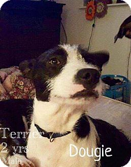 Terrier (Unknown Type, Small) Mix Dog for adoption in DeForest, Wisconsin - Dougie