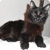 Adopt A Pet :: Black - Chattanooga, TN