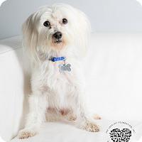 Adopt A Pet :: Emmet - Inglewood, CA
