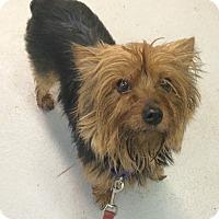 Adopt A Pet :: Jill - Oak Ridge, NJ