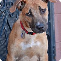 Adopt A Pet :: Charlie von Zeven - Los Angeles, CA