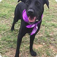 Adopt A Pet :: Jacie in Texarkana, TX - Texarkana, TX