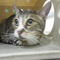 Adopt A Pet :: Tootsie - Reno, NV