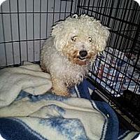 Adopt A Pet :: Kerri - Denver, IN