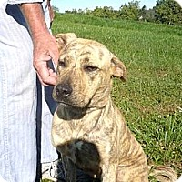 Adopt A Pet :: # 222-12 RESCUED! - Zanesville, OH