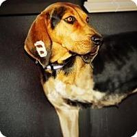 Adopt A Pet :: Momma - Cheyenne, WY