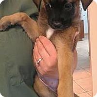 Adopt A Pet :: Lilah - Phoenix, AZ