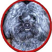 Adopt A Pet :: Smokey - Mays Landing, NJ