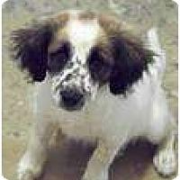 Adopt A Pet :: Natalie - Albany, NY