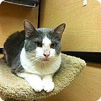 Adopt A Pet :: Fiona - Monroe, GA