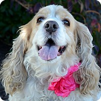 Adopt A Pet :: Peggi - Rockaway, NJ