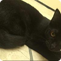 Adopt A Pet :: Oprah - Richboro, PA