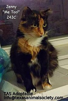 Domestic Longhair Cat for adoption in Spring, Texas - Jenny