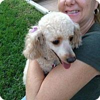Adopt A Pet :: JJ - Boca Raton, FL