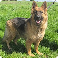 Adopt A Pet :: Maude - Pleasant Grove, CA