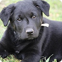 Adopt A Pet :: Jace - Aurora, CO