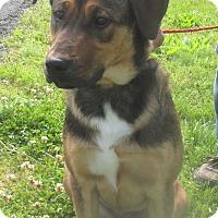 Adopt A Pet :: Fritz - Reeds Spring, MO
