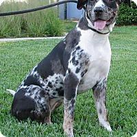Adopt A Pet :: Dixie - Orlando, FL