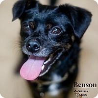 Adopt A Pet :: Benson - Kennesaw, GA