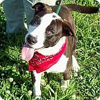 Adopt A Pet :: SPOT/Special Summer Price - Glastonbury, CT