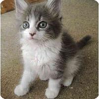 Adopt A Pet :: Webster - Davis, CA