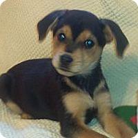 Adopt A Pet :: Max - Newark, DE