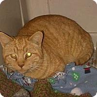 Adopt A Pet :: Garfield - Walnut, IA