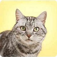 Adopt A Pet :: Missy - El Cajon, CA