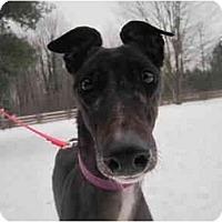 Adopt A Pet :: Ari (Tyler's Ar) - Chagrin Falls, OH