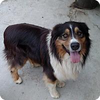 Adopt A Pet :: Maverick - Simi Valley, CA