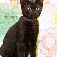 Adopt A Pet :: Hyatt - Sterling Heights, MI