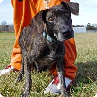 Adopt A Pet :: Poppy - St. Francisville, LA