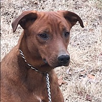 Adopt A Pet :: Grizzly - Spring Valley, NY