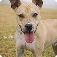 Adopt A Pet :: Kansas - Dickinson, TX
