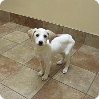 Adopt A Pet :: Blanche *Petsmart GB* - Appleton, WI