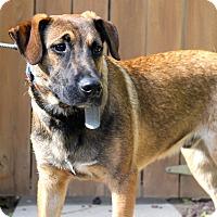 Adopt A Pet :: Luke Bryan - Los Angeles, CA