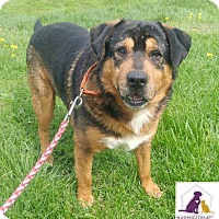 Adopt A Pet :: Abby - Eighty Four, PA