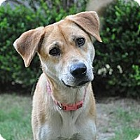 Adopt A Pet :: MAYBELLINE/Summer Pricing - Glastonbury, CT