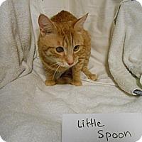 Adopt A Pet :: Little Spoon - Maywood, NJ