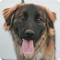 Adopt A Pet :: Clyde - Canoga Park, CA