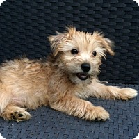 Adopt A Pet :: Fallon - Statewide and National, TX