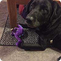 Adopt A Pet :: Rocco - Loveland, CO