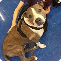 Adopt A Pet :: Abigail (peter) - Homestead, FL